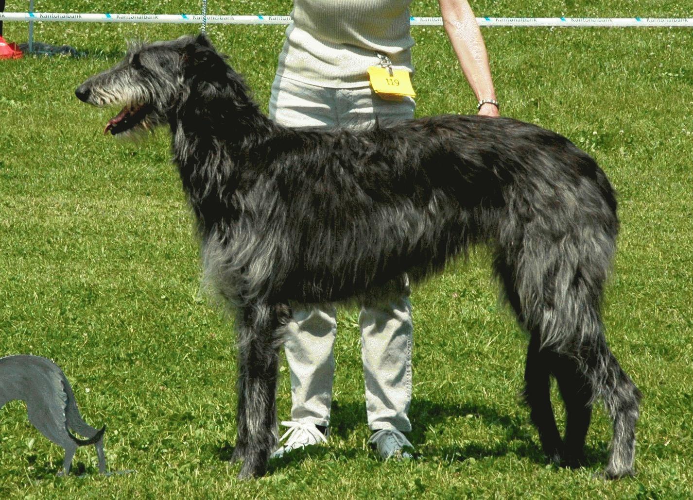 Ard-Shona 2005